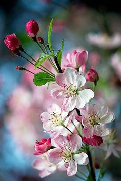 Cut grass, thunderstorms and blossom are just 3 things that remind us spring is in the air. Beautiful Flowers Pictures, Beautiful Flowers Wallpapers, Flower Photos, Amazing Flowers, Pretty Flowers, Nature Pictures Flowers, Flowers Pics, Spring Blossom, Exotic Flowers