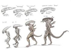 The Evolution of the Deacon