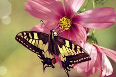 Summer! by mqRina.deviantart.com