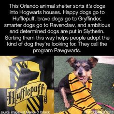 This Orlando animal shelter sorts it's dogs into Hogwarts houses. Happy dogs go to Hufflepuff, brave dogs go to Gryffindor, smarter dogs go to Ravenclaw, and ambitious and determined dogs are put in Slythen'n. Sorting them this way helps peo. Funny Animal Memes, Cute Funny Animals, Cute Baby Animals, Funny Dogs, Cute Dogs, Funny Memes, Funny Videos, Animal Humor, Smart Animals
