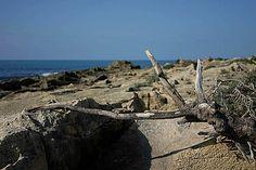 Scogli di Punta Braccetto - Ragusa - Sicilia