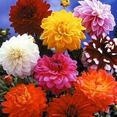 Bulbs aren't just for spring. Dahlias, Glads, Lillies are all good choices.