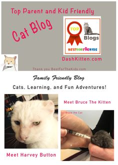 We have been voted one of the top Cat Blogs for Parents and Kids by BestForTheKids.com.  Discover our cat adventures, cat knowledge and cat fun on the blog. Feel free to browse along our menu for reviews, books and fun!