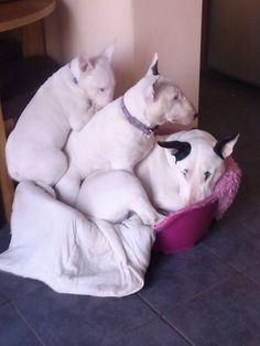 Three in a bed and the little one said...rollover, rollover!