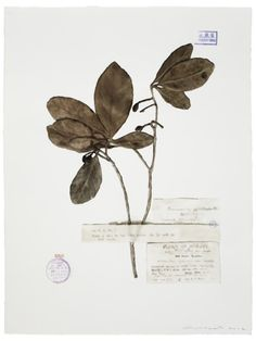 """thinkingimages: """" """"Guo Hongwei, Plant No. 6, 2012; Watercolor on paper, 30 × 21 in """" """""""
