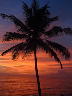 Varkala - sunset with silhouetted palm by steviewonderous on Flickr.