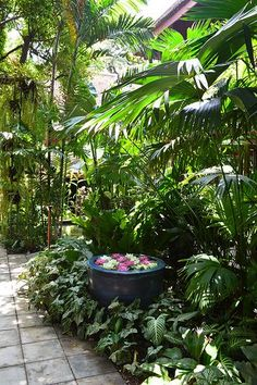 Backyard garden tropical garden ideas Jim Thomsons House and Garden, Bangkok, Thailand