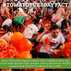 Happy #TomatoTuesday! Do you know the name of the festival where this crazy scene happens?