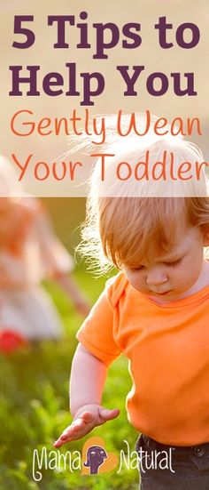 5 Tips To Help You Gently Wean Your Toddler Right around my toddler's birthday, I started the weaning process. Here are the steps I took to do it gently and without much drama. Weaning Breastfeeding, Breastfeeding Toddlers, Breastfeeding And Pumping, Parenting Toddlers, Weaning Toddler, Baby Led Weaning, Natural Parenting, Parenting Advice, Gentle Parenting