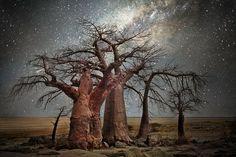plus-vieux-arbres-du-monde (7)