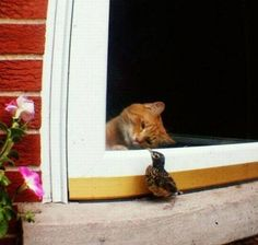 I promise I won't kill you if they let me out. We can play! Animals And Pets, Funny Animals, Cute Animals, Funny Horses, Funny Birds, Funny Cats, Cats Humor, Animal Quotes, Animal Memes