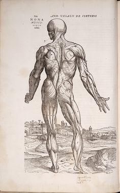 Vesalius - illustration
