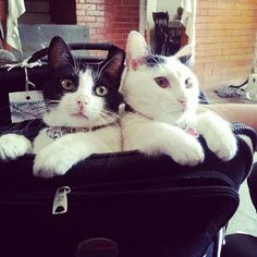 """""""Ready."""" 