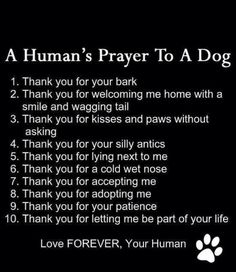 Humans prayer to a dog