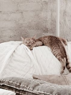 tabby cat sleeping in a funny pose Baby Animals, Funny Animals, Cute Animals, Crazy Cat Lady, Crazy Cats, Photo Chat, Mundo Animal, Cat Sleeping, Sleeping Beauty