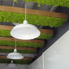 #mossart ceiling in #kelowna. Great for #accoustic. @bynaturedesign #moss #mosswall