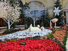 The Bellagio, Las Vegas the inside gardens were amazing