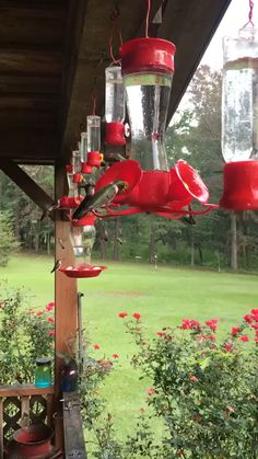 Inspiration to purchase or make hummingbird feeders and watch in fascination these little birds hover, feed, fight and just show up over and over again during the season. Endless hours of joy. Beautiful Gif, Beautiful Birds, Animals Beautiful, Animals Amazing, Cute Funny Animals, Cute Baby Animals, Humming Bird Feeders, Pretty Birds, Colorful Birds