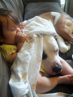 In the late 19th century, pitbulls were thought to be the perfect nanny dog due to their loyalty and protectiveness.