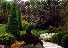 "Picea abies ""Nidiformis""  Saxifraga ""Peter Pan"" (Камнеломка ""Питер Пен"") Chamaecyparis pisifera ""Filifera Aurea Nana""  Gaulteria procumbens (Голтерия лежачая) Berberis thunbergii ""Atropurpurea Nana""  Arabis caucasica (Арабис кавказский) Picеa glauca ""Conica""  Geranium macrorrhizum (Герань крупнокорневая) Berberis ottawensis ""Superba""  и Ciematis ""Pamela Jackman""  Salix caprea ""Kilmarnock""  Salix hastata ""Wehrhahnii"""