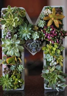 floral: letter with succulents growing inside : )