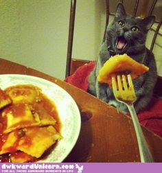 An impasta. - LOLcats is the best place to find and submit funny cat memes and other silly cat materials to share with the world. We find the funny cats that make you LOL so that you don't have to. Cute Cats, Funny Cats, Funny Animals, Adorable Animals, Awkward Animals, Baby Animals, Funniest Animals, Adorable Puppies, Adorable Kittens