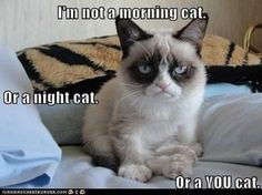 I'm not a morning cat.  Or a night cat.  Or a YOU cat! Bahah my old cat patch