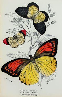 Beautiful Butterflies in Black Orange Yellow. by PaperPopinjay, $10.00