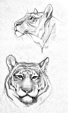 40 Free & Easy Animal Sketch Drawing Ideas & Inspiration · Brighter Craft sketches 40 Free & Easy Animal Sketch Drawing Information & Ideas - Brighter Craft Easy Animal Drawings, Easy Drawings, Animal Sketches Easy, Cat Drawing, Drawing Sketches, Drawing Ideas, Easy Tiger Drawing, Sketching, Easy Animals