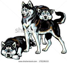stock-vector-siberian-husky-sled-dogs-illustration-isolated-on-white-background-170336153.jpg (450×424)