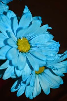 Complete lesson plan on how to earn the blue Daisy promise center.