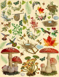 Collage Nature, Art Et Nature, Art Du Collage, Wall Collage, Collage Sheet, Digital Collage, Botanical Drawings, Botanical Illustration, Botanical Prints
