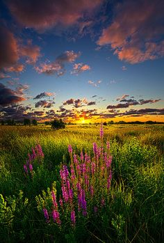 ✯ Whispers by Phil Koch