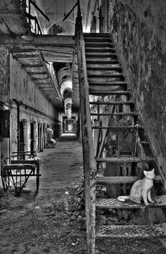 """Guarding the Stairs"" at abandoned East State Penitentiary, Illinois"