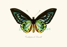 Vintage butterfly instant download printable door Lebonprintables, $2.49