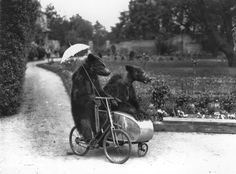 Let's go for a ride, baby... vintage everyday: Strange and Funny Vintage Photos of Intelligent Animals Photo by Fox Photos/Getty Images