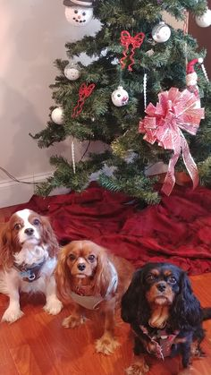 Locksley, Andalusia, and Persephone Christmas 2017