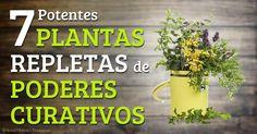 Las plantas medicinales, como el jengibre, el ajo y la menta son remedios naturales que benefician su salud. http://articulos.mercola.com/sitios/articulos/archivo/2014/11/15/plantas-medicinales.aspx