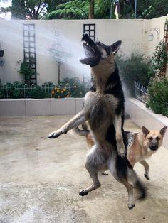 PsBattle: Dog attacks water