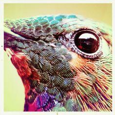 do you like birds?