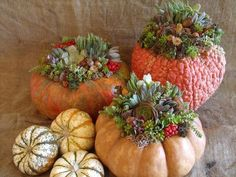 Succulents in pumpkins?  Oh yes!