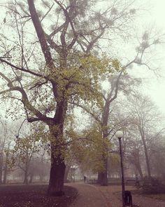 #landscape #green #trees #poland #szczecin #park #andersa #scary