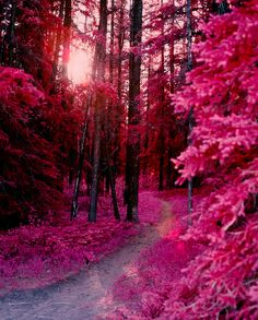 Find images and videos about pink, nature and wallpaper on We Heart It - the app to get lost in what you love. Beautiful World, Beautiful Places, Trees Beautiful, Stunningly Beautiful, Pink Forest, Pretty Pictures, Beautiful Landscapes, Wonders Of The World, Mother Nature