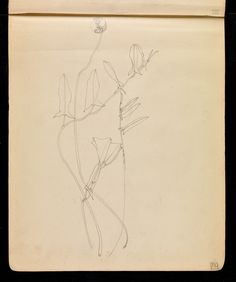 Charles Rennie Mackintosh sketchbooks - convolvus flower - Hunterian Art Gallery Mackintosh collections: GLAHA 53014/6