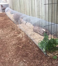 My Jumbo Coturnix Quail (jumbo Japanese quail) enclosure run. Around 6 meters long and high. Just avery mesh and a lot of tent pegs, the quails love it! Quail Pen, Quail Coop, Backyard Chicken Coops, Chickens Backyard, Chicken Cages, Chicken Houses, Chicken Feeders, Quail House, Button Quail
