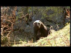 Waking up from Hibernation - Animals: The Inside Story - BBC - YouTube