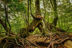 Yakushima, Intimate Photography, Red Cedar, Buy Prints, Natural History, All Over The World, Conservation, California, Japanese