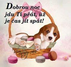 Good Night, Good Morning, Pets, Fun, Nighty Night, Buen Dia, Bonjour, Good Night Wishes, Good Morning Wishes