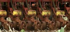Falta de chuva compromete o plantio de grãos nas principais regiões do Brasil http://glo.bo/1oy8Zb5