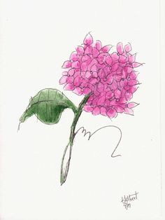 """Original artwork of a bunch of pink hydrangeas rendered in pen, ink and watercolor. It is titled """"Pink Hydrangeas"""" and is signed and dated at the bottom with the title on the back. The watercolor is painted in light and dark shades of pink with a large green leaf off to the side."""